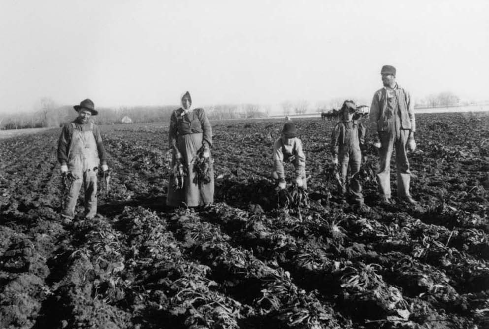 Volga German family harvesting sugar beets near Fort Collins. Source: Fort Collins Public Library.